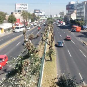 Denuncia Toluca poda y retiro ilegal de arbolado urbano