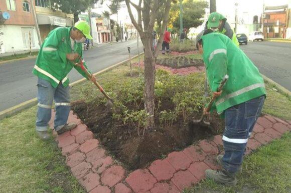 Continúan acciones de limpieza en parques y jardines de Toluca