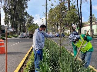 Trabajos de reforestación en Toluca: plantación de más de dos millones de árboles y plantas
