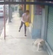 Instaura Toluca proceso administrativo por agresión a canino en San Pablo Autopan