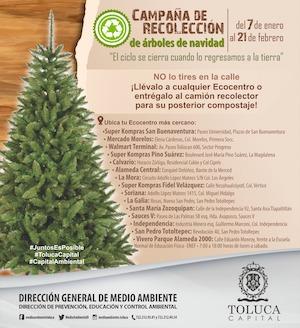 Continúa campaña de recolección de árboles naturales de navidad