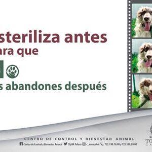 Esterilizados en Toluca más de 36 mil perros y gatos