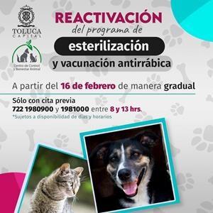 Reactiva Toluca programa de esterilización y vacunación antirrábica