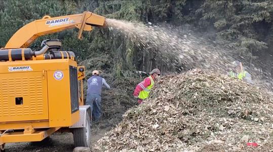 Garantiza Toluca que los árboles naturales de navidad recolectados vuelven a la tierra